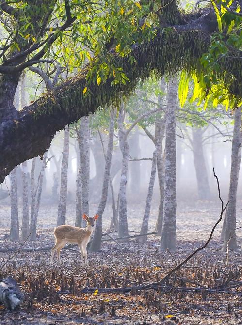 [travel abroad] 마지막 오지 방글라데시
