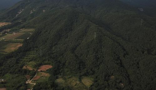 제천 박달재 인근 10ha 시유림에 자작나무 숲 조성