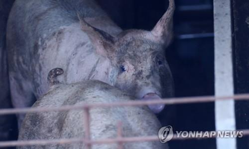 S. Korea to beef up measures to prevent spread of African swine fever - 1