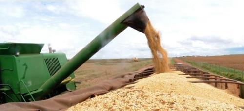 브라질의 농산물 수확량이 2년 만에 증가세로 돌아설 것으로 보인다. [국영 뉴스통신 아젠시아 브라질]