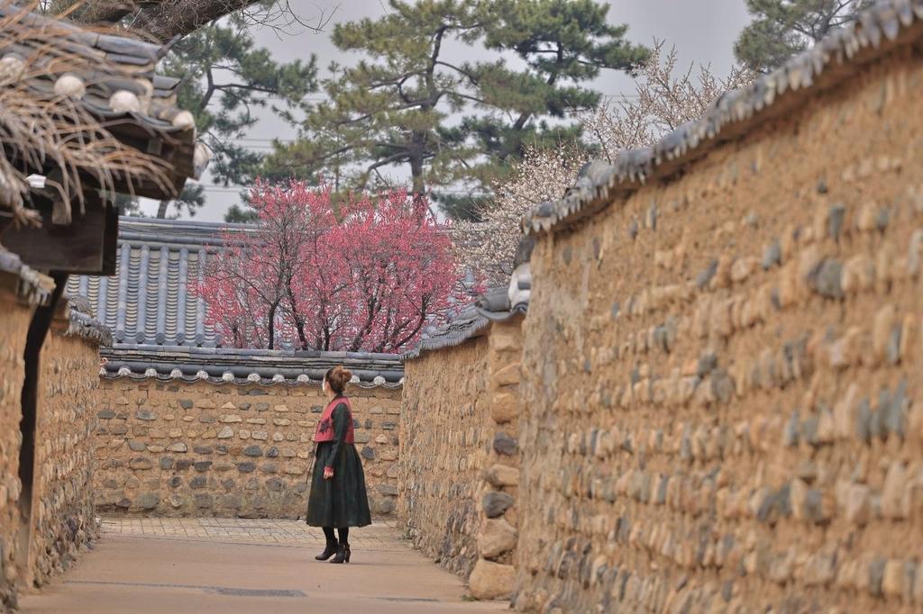 한복디자이너 강민정 씨가 직선으로 뻗은 인흥마을 흙돌담길을 걷고 있다. [사진/성연재 기자]