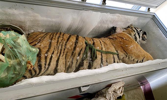베트남의 한 가정집 냉동고에서 발견된 호랑이 사체