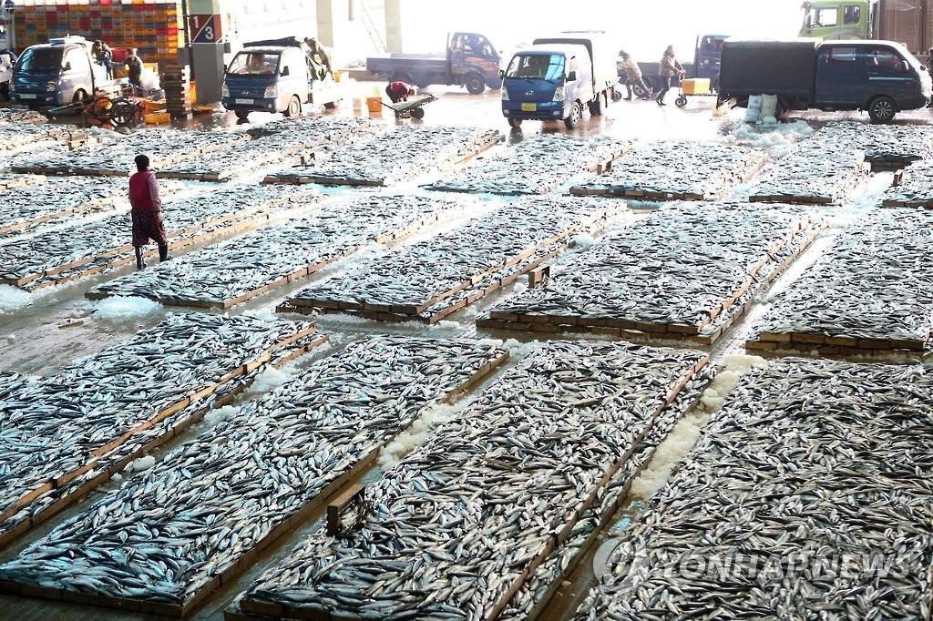 생선을 바닥에 쌓아두고 경매하는 부산공동어시장