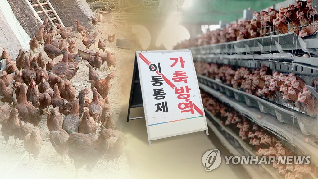 Suspected bird flu cases discovered in Gangwon Province - 1