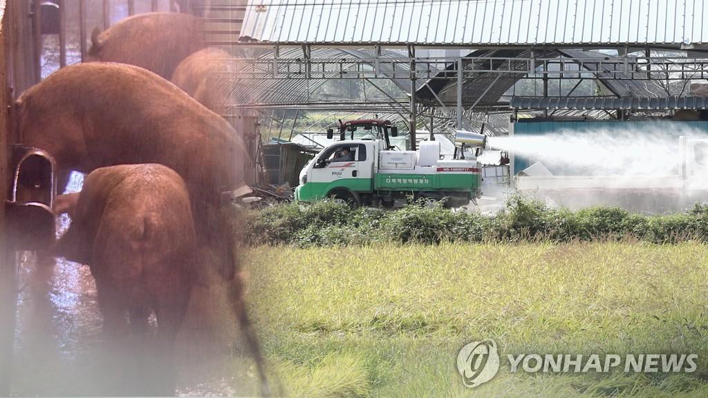 정부, 국제NGO 통한 北돼지열병 방역 '우회 지원' 추진 | 연합뉴스
