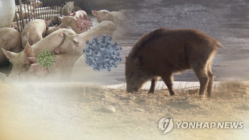 S. Korea reports 9 more wild boars infected with African swine fever