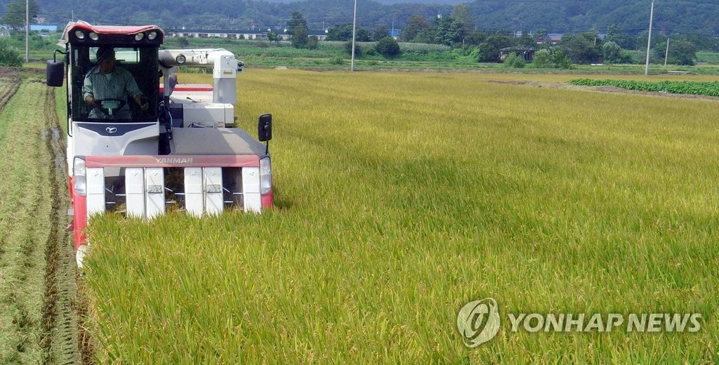 This file photo shows a rice paddy in the eastern county of Yangyang, Gangwon Province, on Sept. 2, 2015. (Yonhap)
