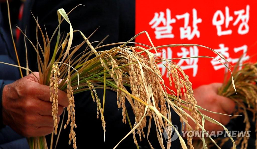 쌀전업농, 수확기 구곡 방출 반대