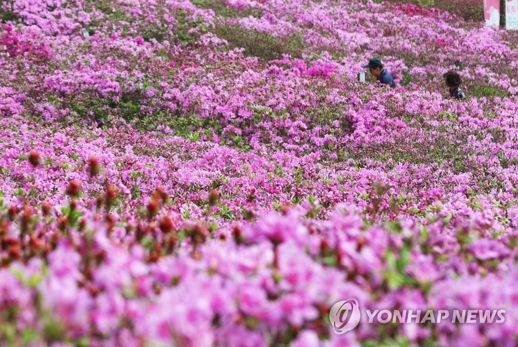 연분홍색으로 물든 봄