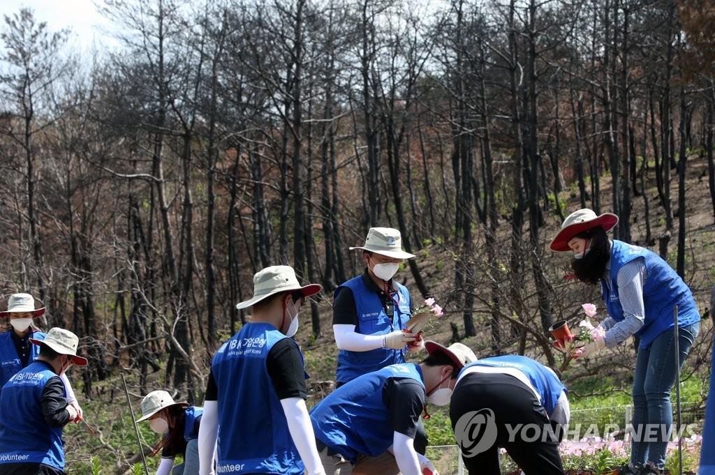삭막한 산불피해 마을 살리는 자원봉사자