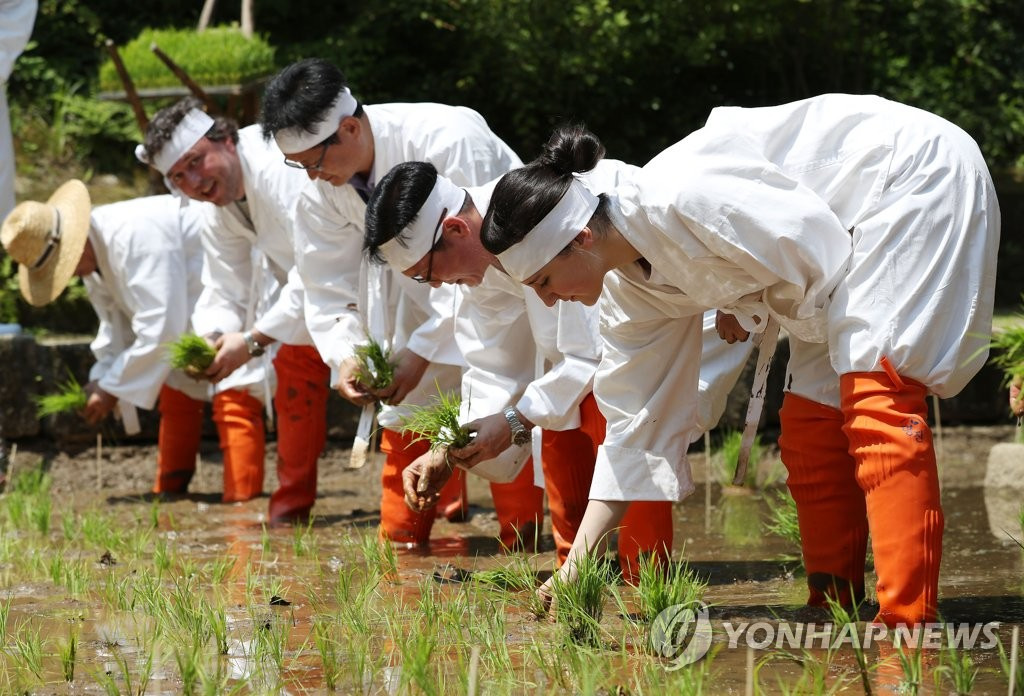 Foreign tourists experience rice planting
