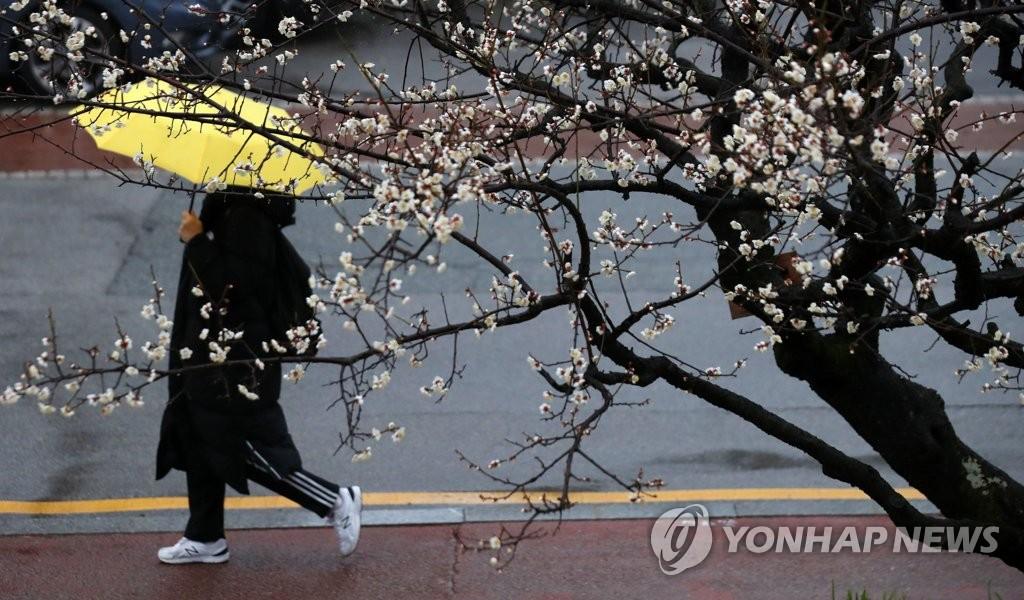 [내일날씨] 낮부터 전국에 봄비…강원도 일부 지역 눈 | 연합뉴스