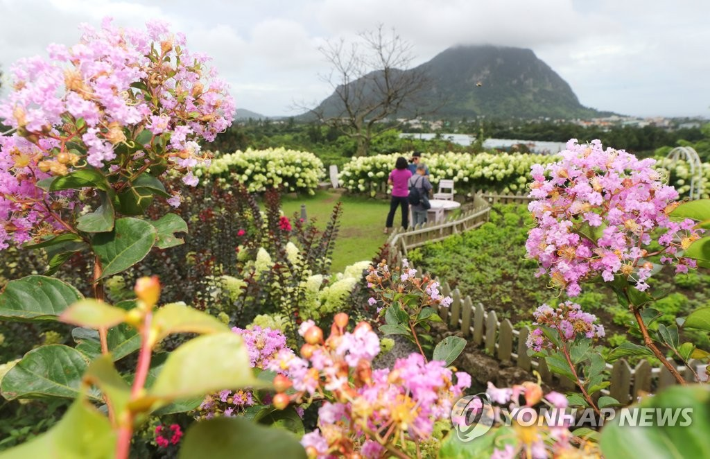 Visitors enjoy nature at a cafe in Seogwipo on the country's southern resort island of Jeju on Aug. 10, 2020. Damage from Typhoon Jangmi, which passed near the island earlier in the day, was limited. (Yonhap)